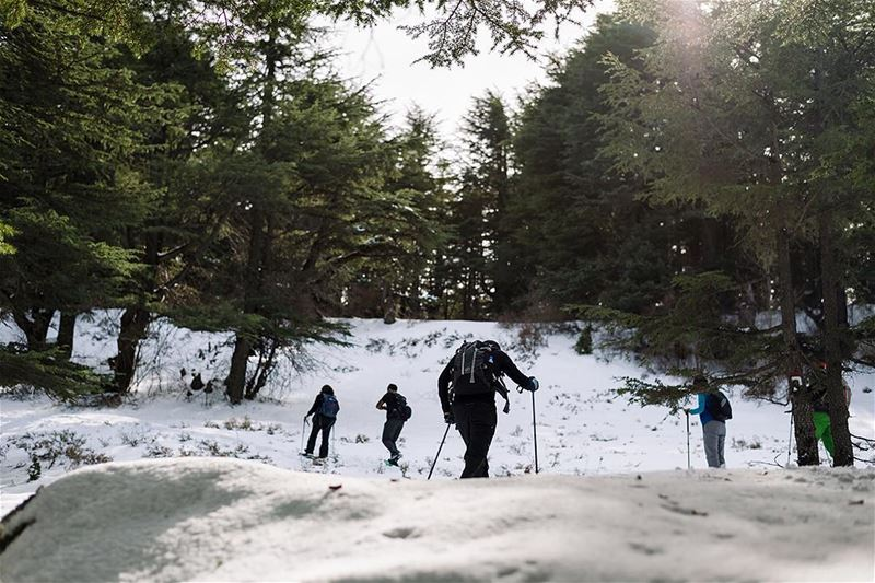 Good company is a must for you to enjoy the places you go through🌲❄️-... (Hadath El-Jubbah, Liban-Nord, Lebanon)