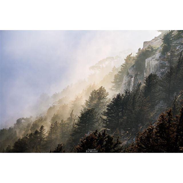 ehden ehdeniyat livelovelebanon trees fog clouds cloudporn ...