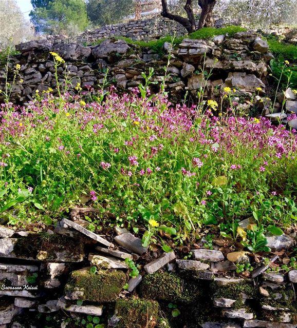 flowers wildflowers landscape village beautiful ...