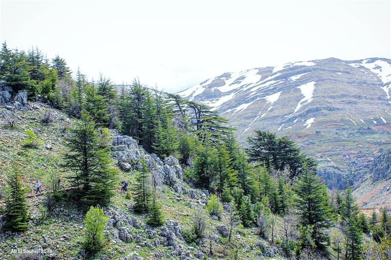tb tannourine mountains northlebanon cedars trees lebanon sky ... (Arz Tannoûrîne)