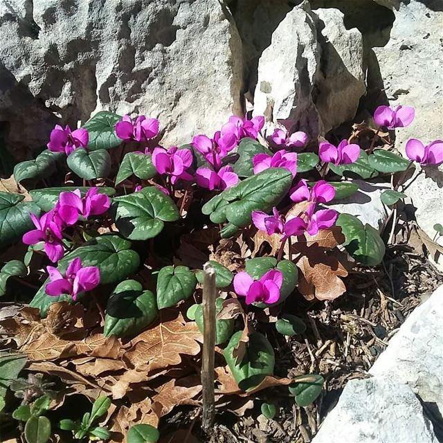 Early Spring in JabalMoussa. unescomab unesco biospherereserve ...