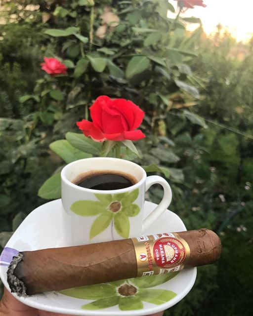 Afternoon Therapy. afternoon coffee relax flowers cigar cigars hupmann... (Zahlé, Lebanon)