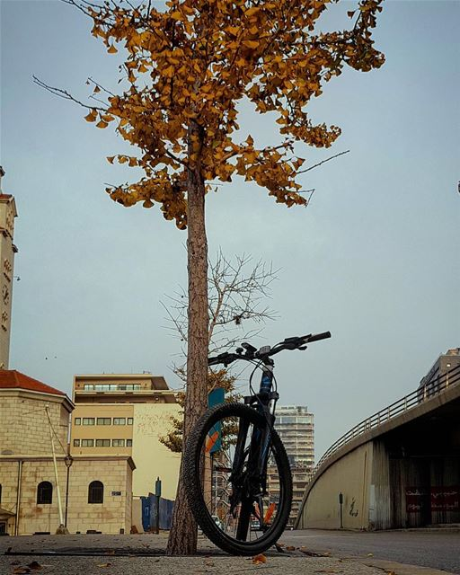 When Mother Nature gets confused between the Four Seasons...🍁🍃🍂🍃🍁... (Downtown Beirut)