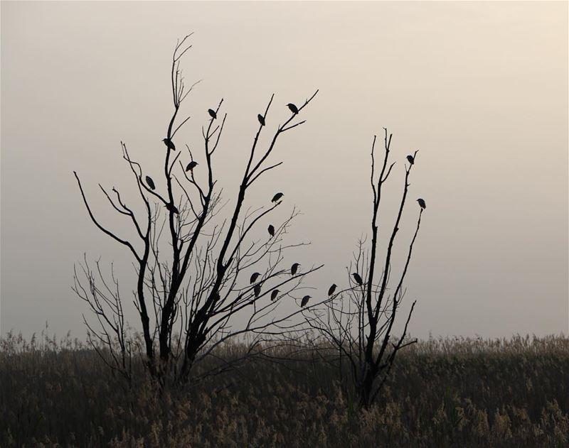 Morning.... photography photographer photooftheday landscape... (`Ammiq, Béqaa, Lebanon)
