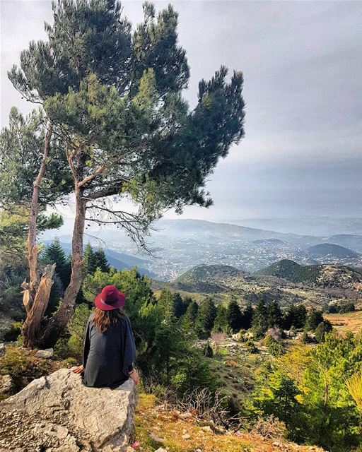 Just gazing at this beautiful view of Akkar from the Qammoua forest! Did... (El Qammoûaa)