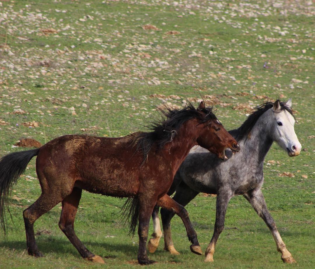 horse wild freedom animals outdoor jezzine lebanon day green ... (Ain Zaarour Camp-Jezzine)