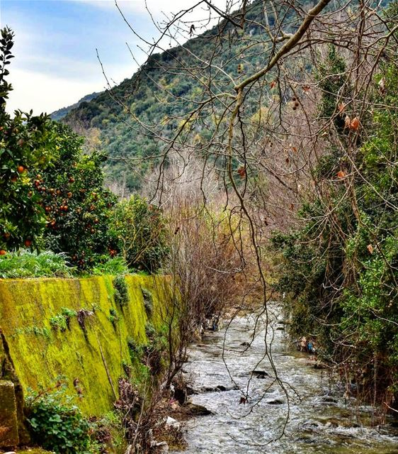 Be still like a mountain and flow like a river river water ... (Kaftoûn, Liban-Nord, Lebanon)