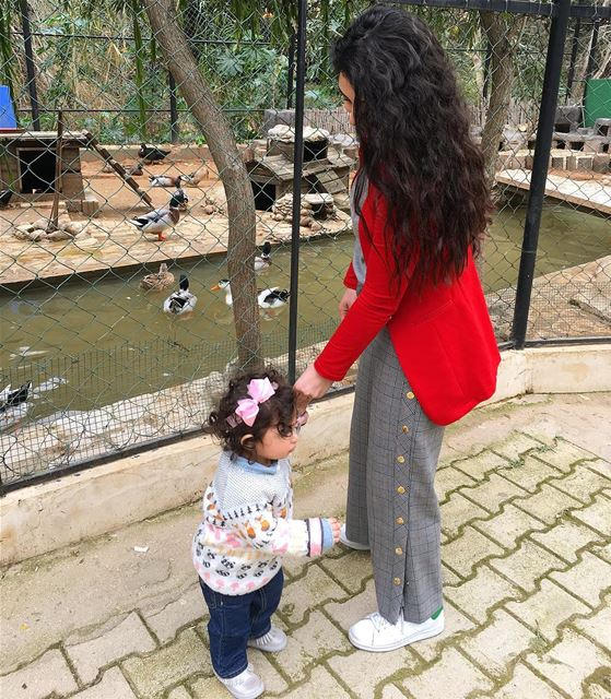My little one went to the Zoo Yesterday...to see her favorite animals up... (Animal City Lebanon)