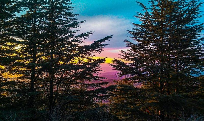 The best dreams happen when you're awake✨ cedarsofgod cedars ... (Maaser El Shouf Cedar Reserve محمية ارز معاصر الشوف)