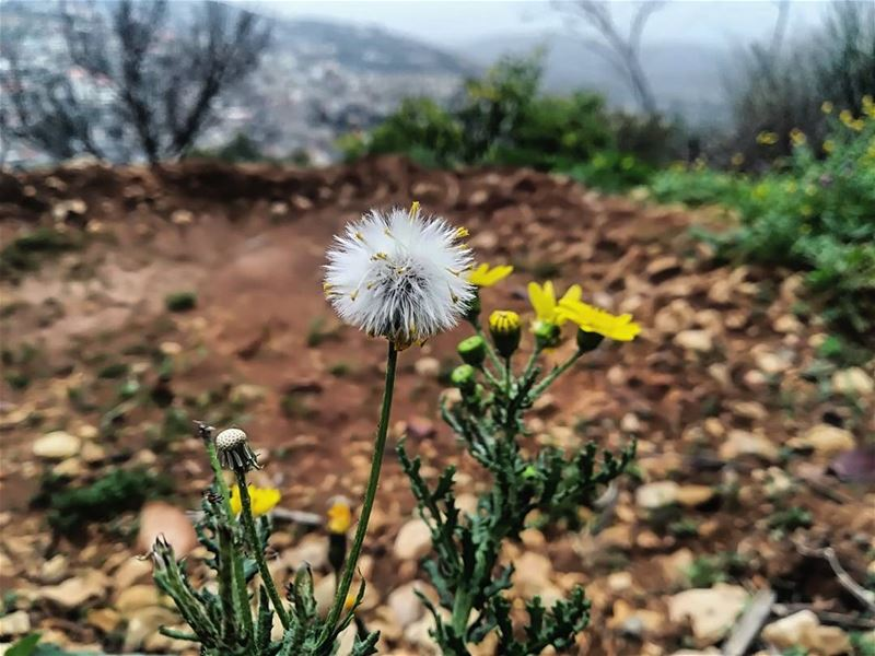 flowers  green  yellowflower  flower  amazingview  instalike ... (Hasbaya)