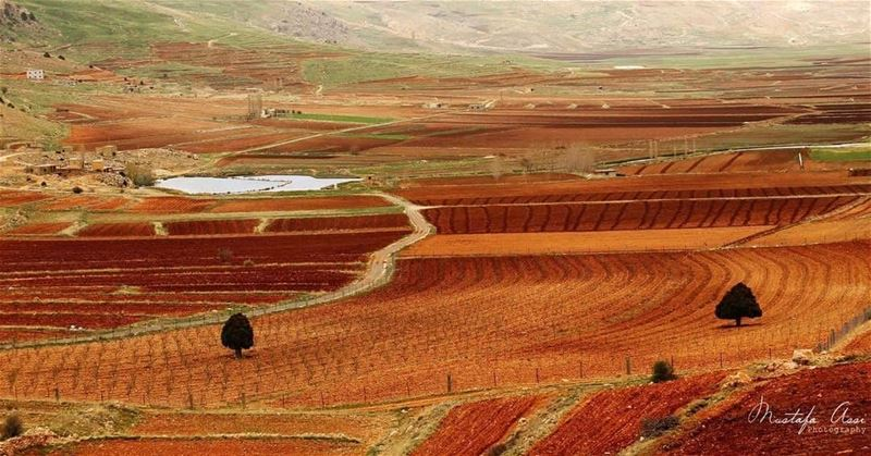 Nature is the art of godCredits to @mustafaassi Hermel Bekaa Lebanon ... (El Hermel, Béqaa, Lebanon)