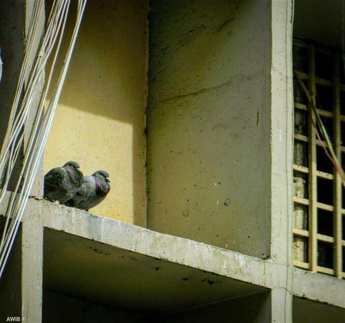 birds streetphotography outdoors noperson travel tourism ... (Jemmayze)