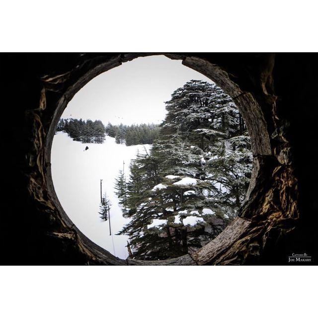 cedars cedarsofgod window trees snow beautifullebanon ...
