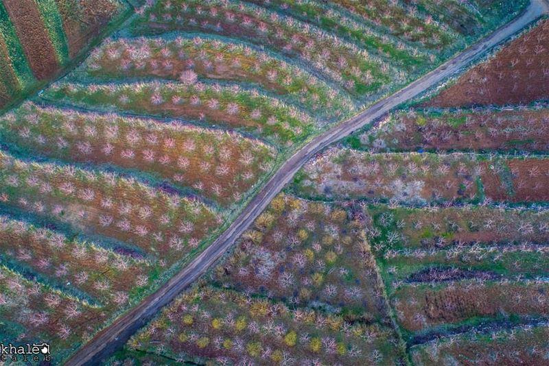 إحدى الحقول الزراعية بكل الالوان ❤🌸 livelovebeirut lb proudlylebanese ...