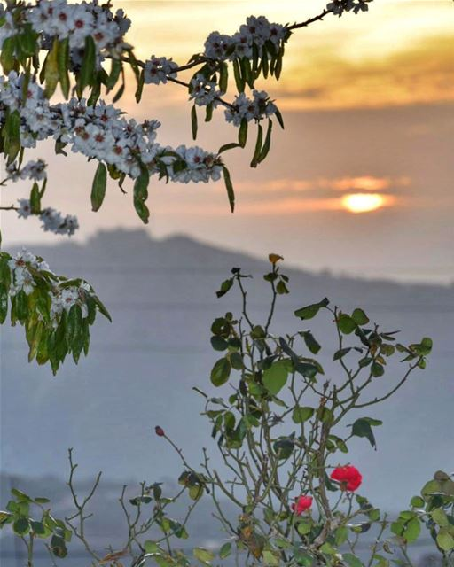 May your every sunset carry roses of gratitude for the day that passed &... (El Qlaïaâ, Al Janub, Lebanon)