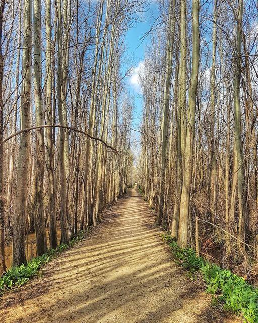 """He who plants a tree, plants a hope"".Lucy Larcom hope trees road ... (Beqaa Valley)"