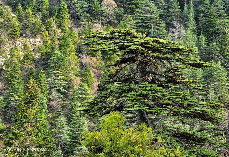 hiking hikingadventures cedars cedarsofgod ehden ehdennaturereserve ...