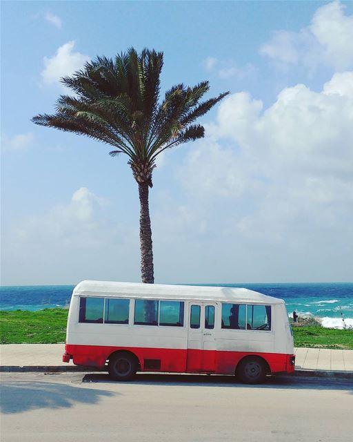 L.A. Vibes 🚌 🌴 (Tyre, Lebanon)