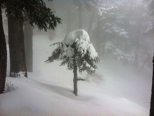 winter  cold  snow  rain  snowing  blizzard  snowflakes  wintertime ... (Cedars of God)