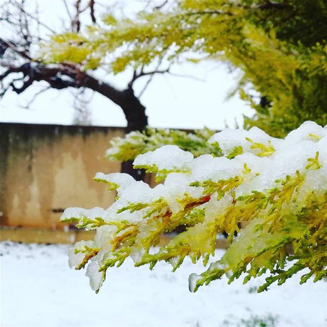 snow phorography naturephotography lebanon lebanonphotography... (Brîtel, Béqaa, Lebanon)
