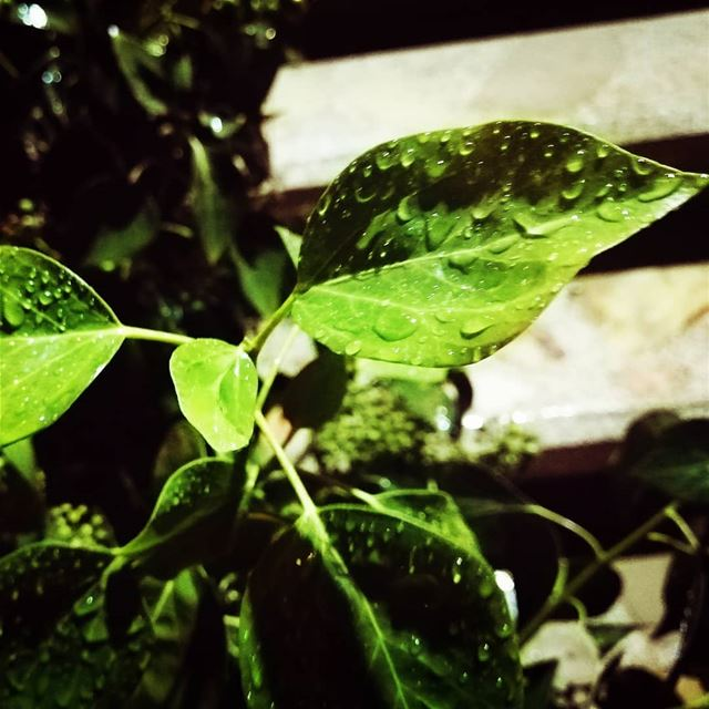 rain naturephotography nature plants lebanon winterphotography photo...