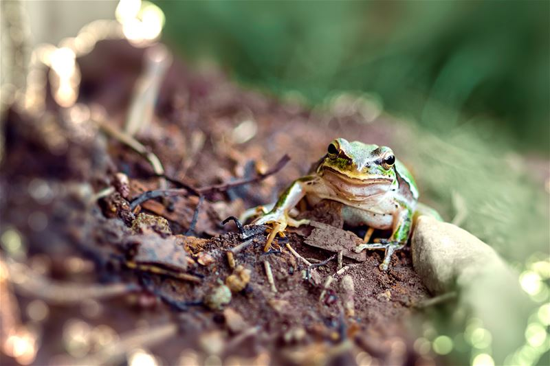 lebanon nature naturescapes frog akimanimals nationalphotography adorable...
