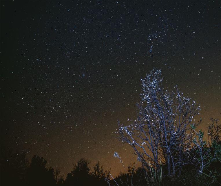 Winter stargazing....... winter stars stargazing ...