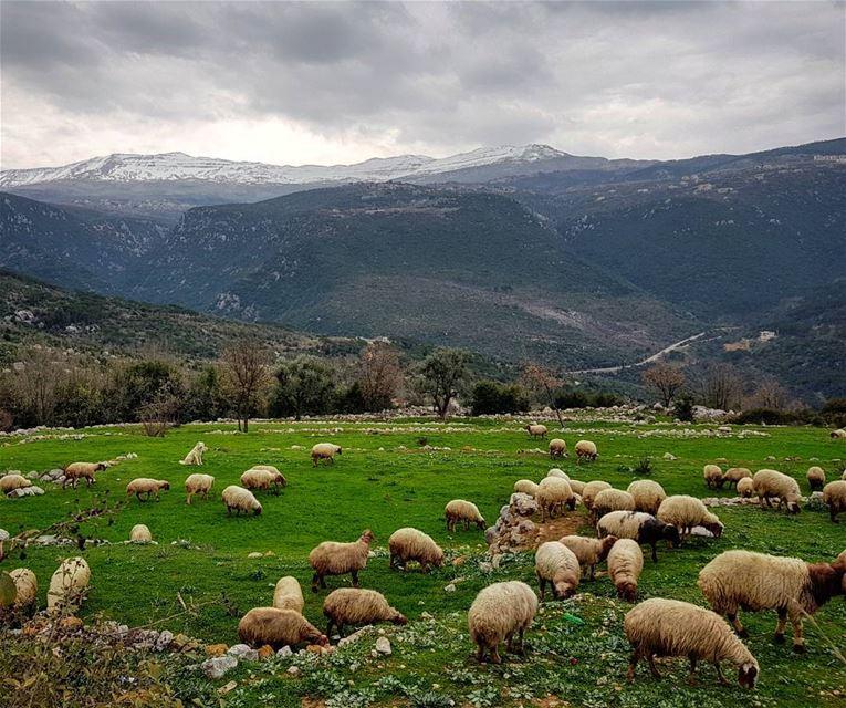 Let's wander where the Wifi is weak-------------A.J-------------... (Bzébdîne, Mont-Liban, Lebanon)