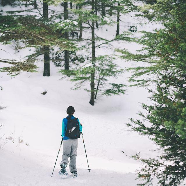 Into the woods🌲❄️- lebanon north hadatheljebbeh snow snowshoeing ... (Hadath El-Jubbah, Liban-Nord, Lebanon)