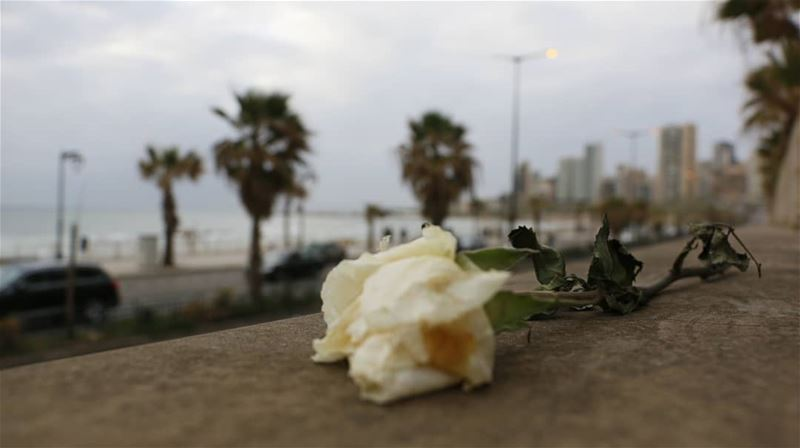 The red rose whispers of passion,And the white rose breathes of love;O,... (Ramlat Al Bayda', Beyrouth, Lebanon)