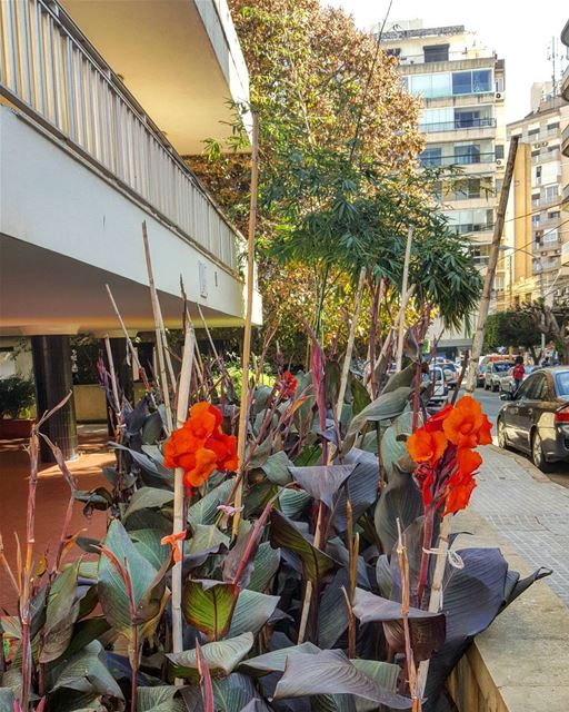 Hint of orange in my hood 🌺🌺  hiddenbeirut  urbanjungle...........