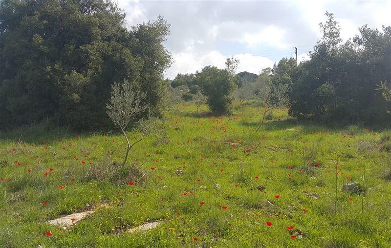 yaroun yarounday lebanon southlebanon livelovesouh livelovebeirut ...