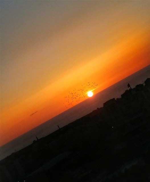 Pigeons at sunset..fly over the sun's eyebrow.. Bidding the day farewell🌇... (Saïda, Al Janub, Lebanon)