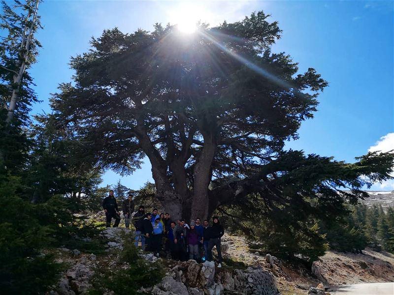 beautifullebanon livelovelebanon cedar hikingadventures friends ...