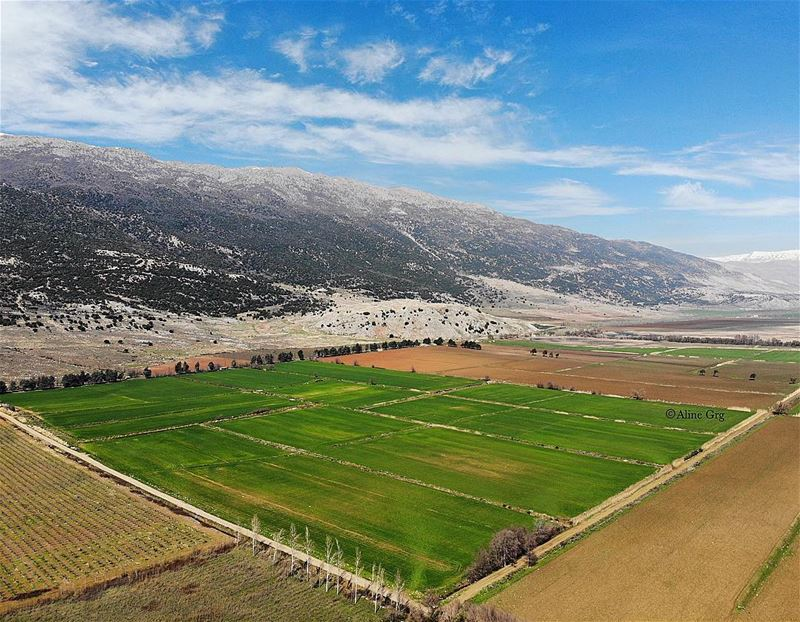 • My Green Carpet • 🏞 drone mavicair aerialphotography nature ... (West Bekaa)