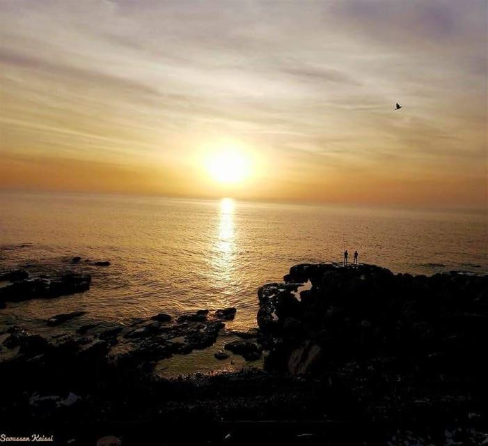 sunset bird sea lebanon ...