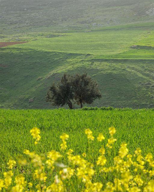 Maydane plain.... photography photographer photooftheday landscape... (Kfar Roummâne, Beyrouth, Lebanon)