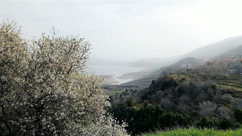 Nature.Cheaper than therapy🌲 walkthroughsaghbine livelovebekaa... (Saghbîne, Béqaa, Lebanon)