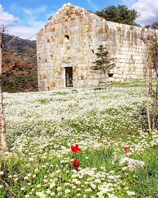 Spring is knocking on the door! 🌸🌼🌺🌻🌷🌾 GOOD MORNING EVERYONE ☀️..... (Lebanon)