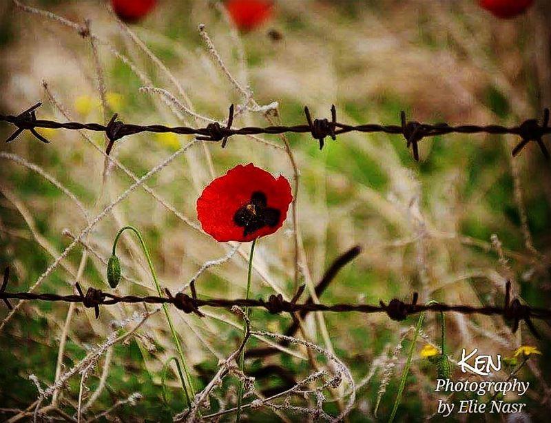 ...يا حرية يا زهرة ناريةيا طفلة وحشية يا حرية صرخوا عالعالي على العاليا (Bouâr, Mont-Liban, Lebanon)