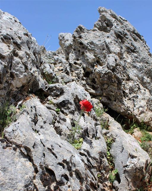 springiscoming ان الثورة تولد من رحم الاحزان red rockclimbing rocky ... (Maghdushah, Liban-Sud, Lebanon)