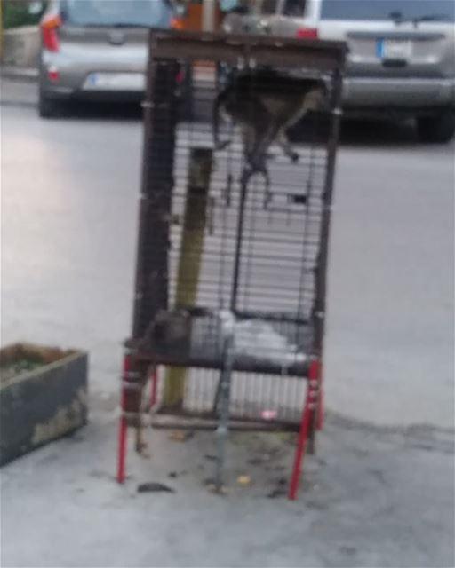 😂😂😂😂😂🐵🐒 im impressed. monkeyshit ... (Chiah, Mont-Liban, Lebanon)