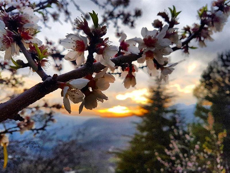 I can smell Spring in the Air 😍💐 lebanoninstagram lebanonactivities ... (Akoura, Mont-Liban, Lebanon)