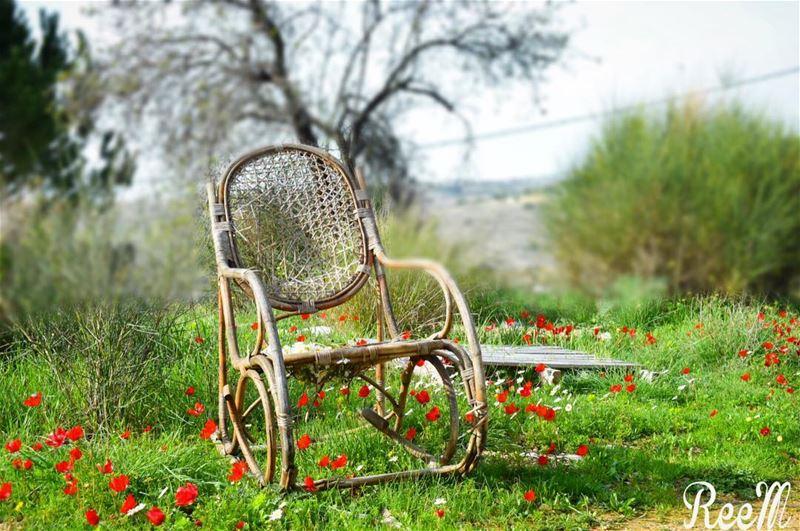 ازهرت الذكريات أرضك المتعطشة لشخص ترك كرسيه بين الازهار ورحل...لم يجلس عليه