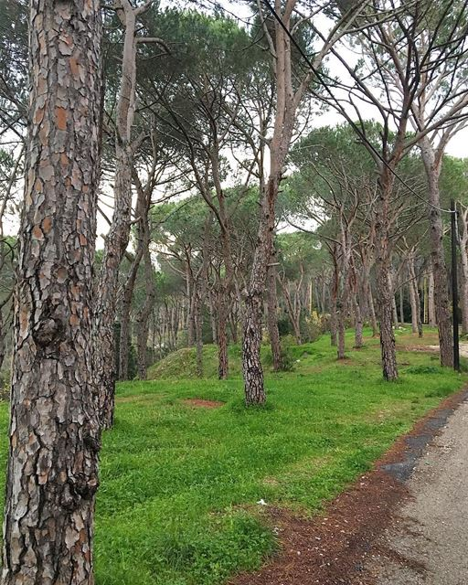 Spring is coming 🌿 Baabdate, Lebanon 🇱🇧..... beautifullebanon ... (Baabdâte, Mont-Liban, Lebanon)