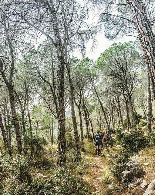 Which is better: walking between trees or between cars? welivetoexplore ... (Beit Meri, Mont-Liban, Lebanon)