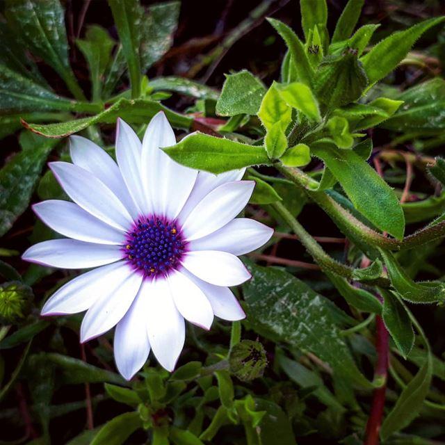 beautiful flower 🏵 hiking selfie lebanon walk relax vacation ... (Jezzine District)