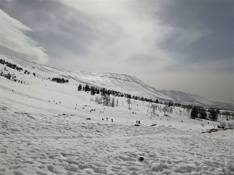 Cedars mountains lebanoninapicture withoutfilters ... (Cedars of God)