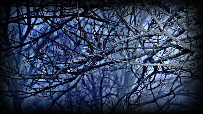 livelovelebanon lebanoninapicture lebanon laqlouq naturephotography ...
