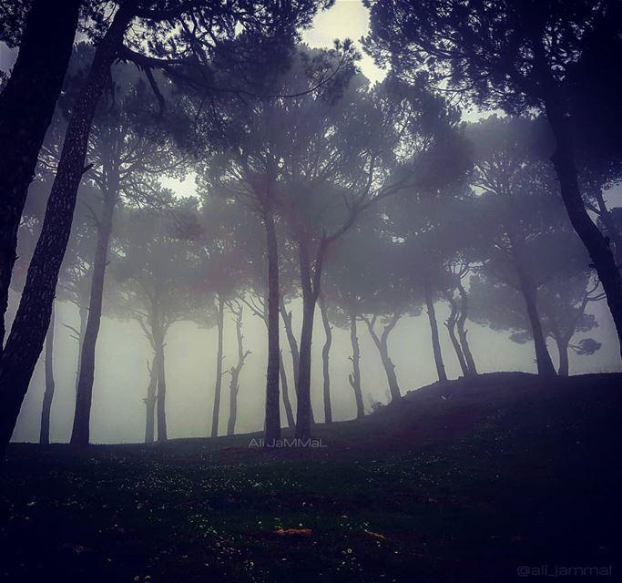 Foggy Forest .-----A.J-----. Lebanon mountlebanon mountain fog ... (Shanayh, Mont-Liban, Lebanon)